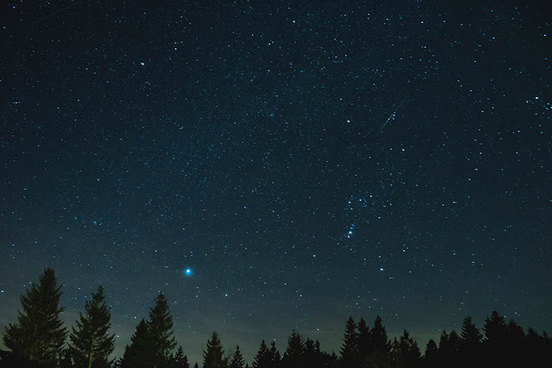 starry sky over silhouette of trees